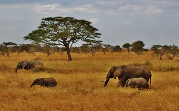 Stijlvolle safari met de Big Five in Tanzania en Kenia
